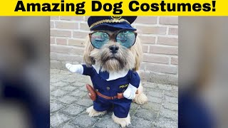 101 Funny Photos Of Dogs In Fancy Dress Costumes 🐶🐕🐶