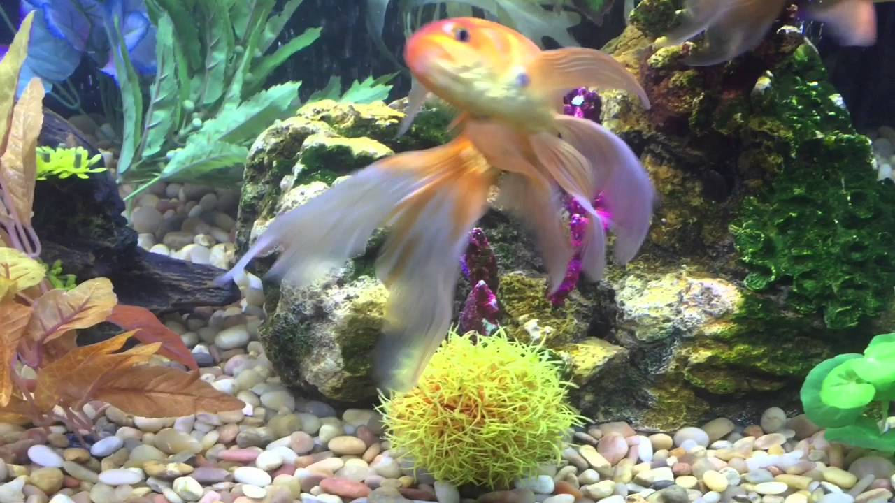 Former petco feeder fish youtube for How much are fish at petco