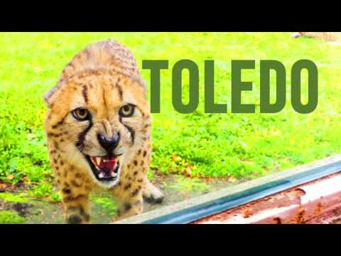Explore 419 for December in Toledo, OH