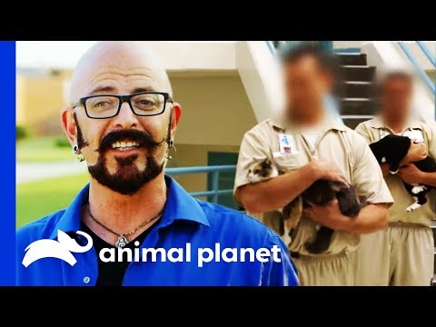 Animal Program Saves Hundreds Of Lives In This Prison | My Cat From Hell
