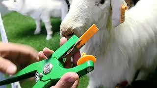 52MM*17MM goat sheep ranch ear tag