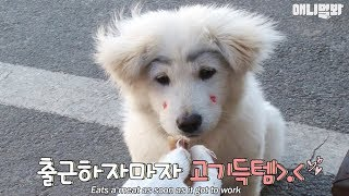 A dog with thick eyebrows which goes to the meat place every single day.