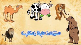 Животные (арабский язык)