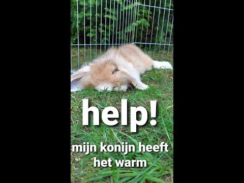 konijnen en warmte