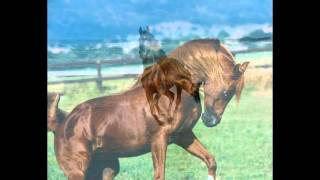 Лагутова Анастасия кони птицы