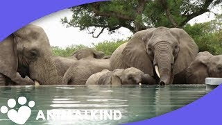 Elephants Quench Thirst In Unlikely Place | Animalkind thumbnail