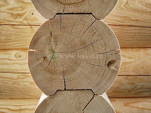 Вопрос: Самая прочная древесина у какого хвойного дерева?