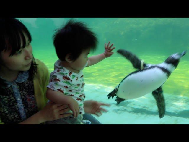 葛西臨海水族園に行ってきました