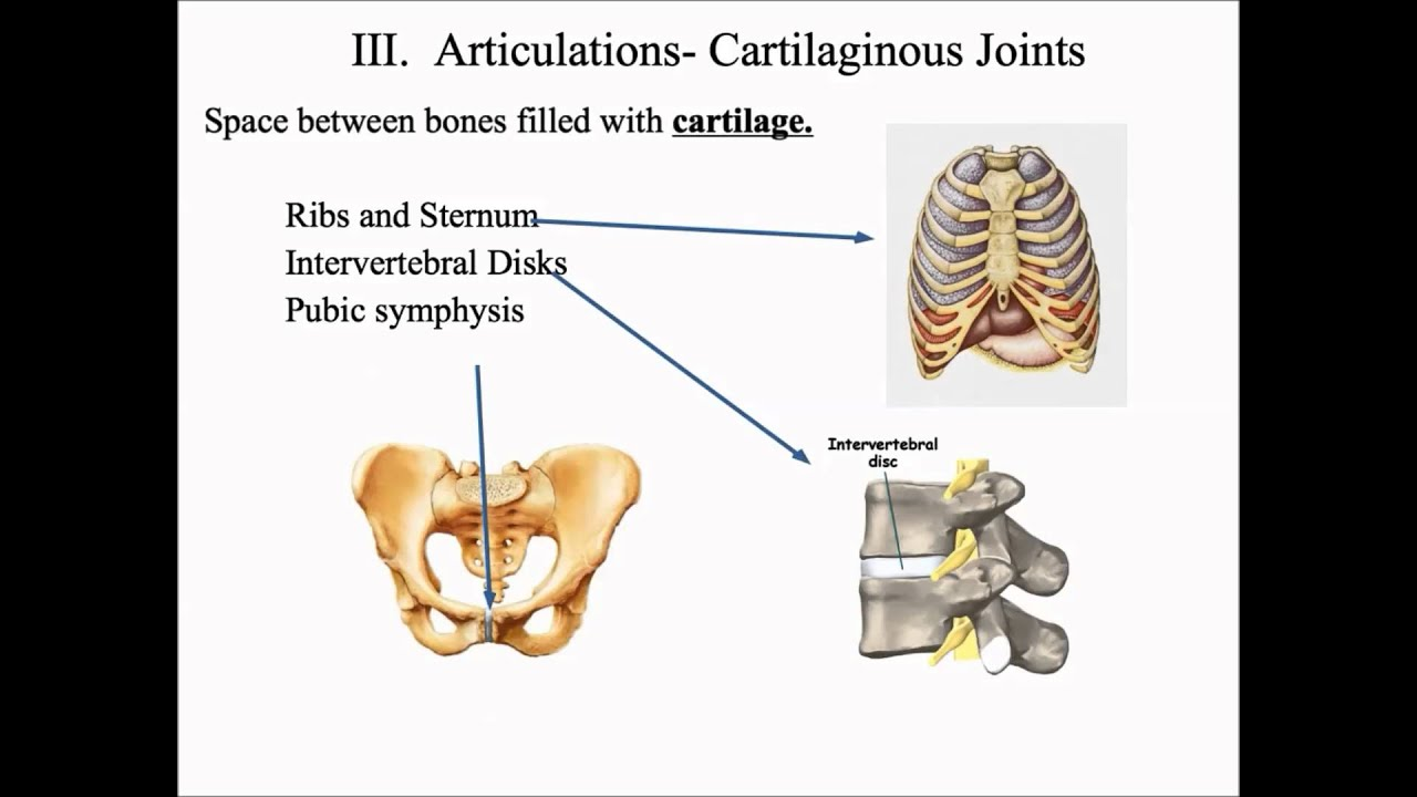 Articulation And Classifications Of Articulations Youtube
