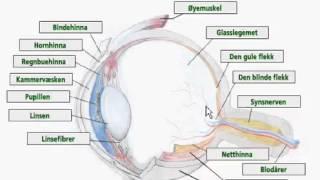 Hvordan øyet vårt virker
