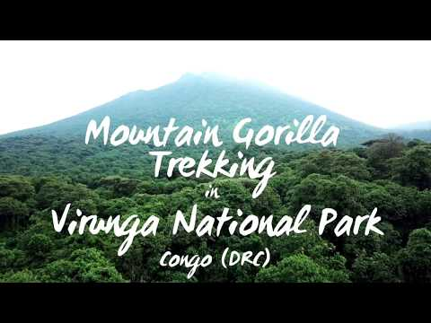 Mountain Gorilla Trekking In Virunga National Park, Congo DRC | 2018