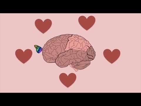 Cómo funciona el cerebro enamorado?
