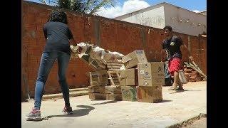 BARÃO NO ATAQUE COM OBSTÁCULO E TESTE DE FOCINHEIRA