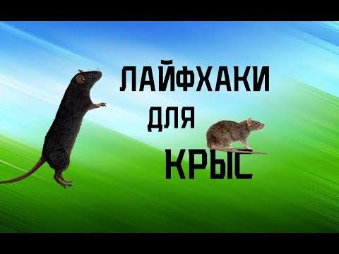Лайфхаки для крыс и других грызунов   Big Family