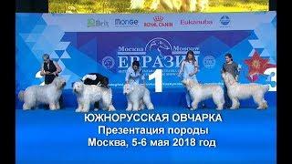 Южнорусские овчарки. Презентация породы.