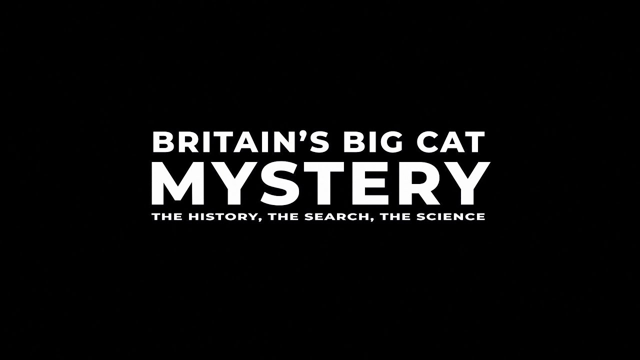 Big Cats ARE Living Wild in Britain!