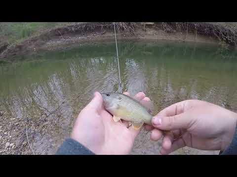 Micro Fishing A Small Creek