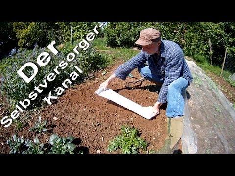 Asiasalate im Garten Saatband Test