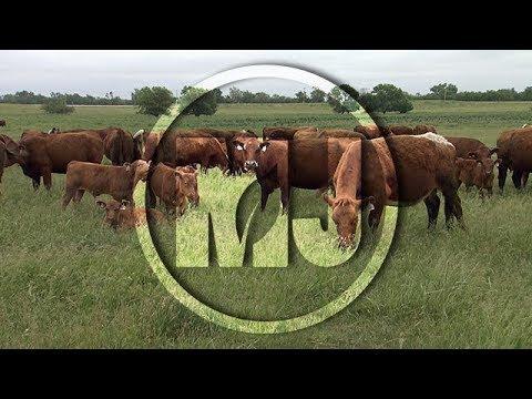 Breeding Costs - Aaron Berger - January 12, 2018