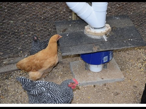 pinterest poultry chickens rat for proof feeders or bird pin a rodent squirrel feeder chicken looking wild