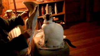 飼い主が大好きで仕方がない猫「かまってニャ~」(動画)