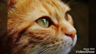 Милые картинки с кошками и собаками