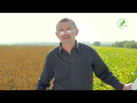Технологія вирощування сої