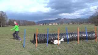 Dog Agility Exercises With Tunnel & Weaves- Improving Speed, Focus, Discrimination And Weave Entries