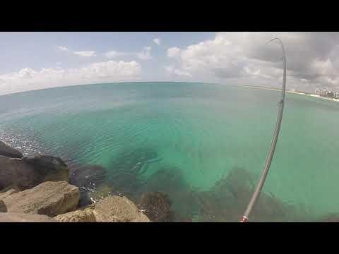 Cancun Shore Fishing! Barracuda And Jacks!