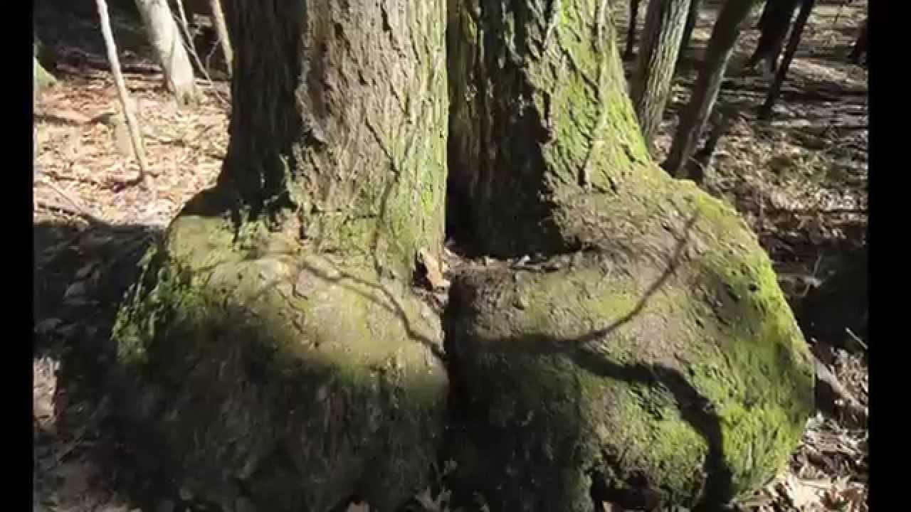KUWTK   Kourtney Kardashian Does Fully Nude Photo Shoot ...