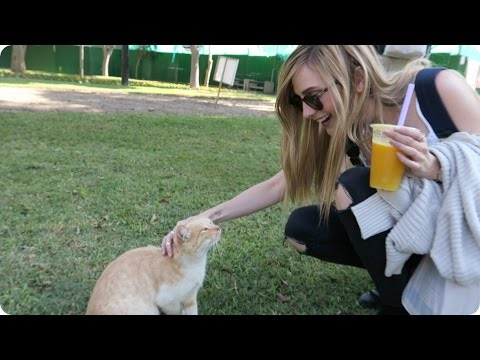 A Park full of CATS in Lima, Peru! | Evan Edinger Travel