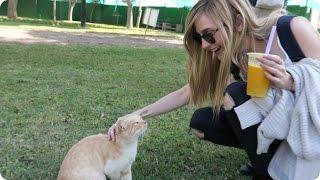 A Park full of CATS in Lima, Peru!   Evan Edinger Travel