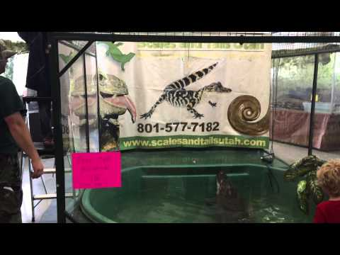 video:Gator Fishing with Scales and Tails Utah