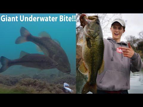 GIANT Spawning Bass W/Underwater Footage!   TylersReelFishing