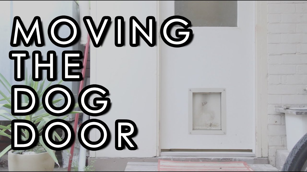 a petco door category install replacement to right doors gates petcostore in shop microchip pens dog more and en sureflap flaps wall pet how white