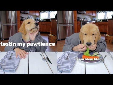 Dog Reviews Restaurant Food