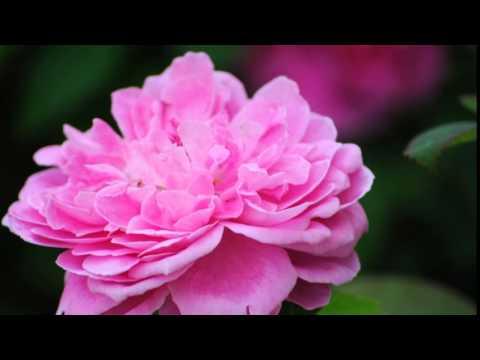 ครูแสง : เรียนลัดถ่ายภาพ 7 ดอกไม้ไทย-Thai Flowers Movie 1