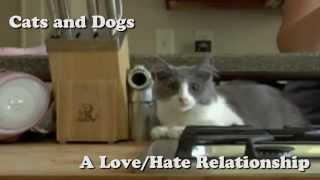 Dogs And Cats Have A Love-hate Relationship
