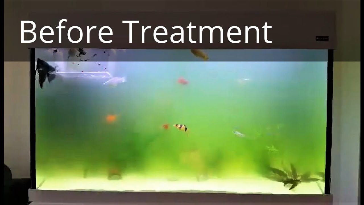 How to get rid of green aquarium water in 2 hours youtube for Green water in fish tank