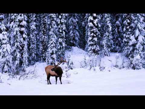 The Coolest Stuff on the Planet- Beautiful Banff (and Jasper)