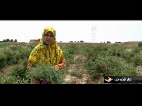 Iran Herbal Distillate producer, Woman job maker توليدكننده عرقيات گياهي زن كار آفرين ايران