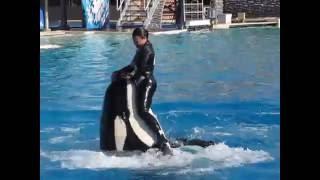 عرض الحيتان القاتلة بسان دييجو 2 San Deigo Seaworld