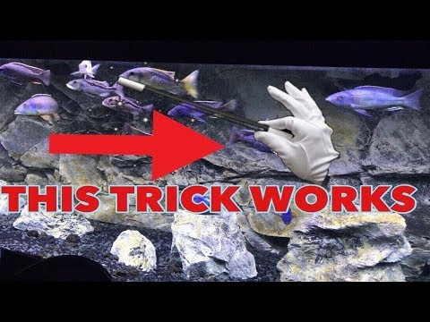 IF YOUR AQUARIUM FISH WONT EAT, THIS TRICK WILL WORK