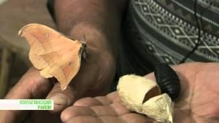 Рождение бабочек шелкопряда(Рождение бабочек шелкопряда., 2012-06-14T09:22:03.000Z)