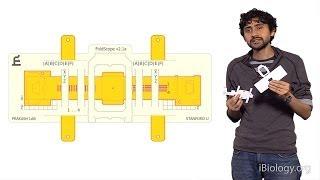 مانو براكاش (ستانفورد): المايكروسكوب المطوي: اوريغامي على أساس ورقة المجاهر