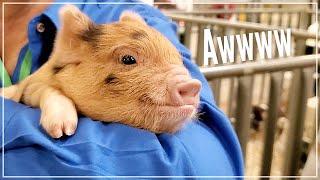 CUTE ANIMALS of Mother Earth News Fair - Belton Texas 2020