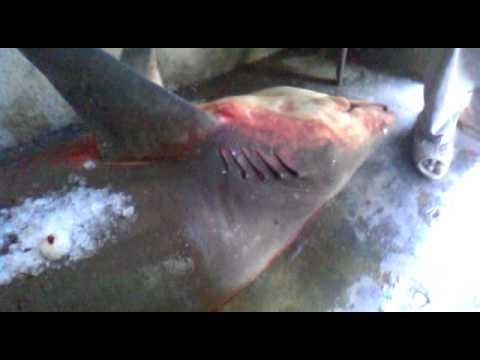 ibrahim hyderi big fish