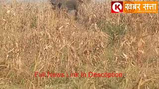 Seoni: VIDEO see the villagers in the panic of this wild elephant and dragon