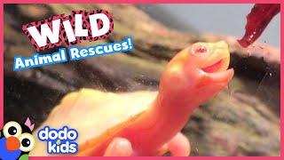 45 Minutes Of Heroes Saving Wild Animals | Dodo Kids