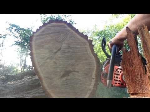 Dolmar PS-510 and PS-6100 in Red Oak - YouTube
